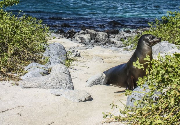 Top 5 animals to see on your expeditions on Galapagos cruises