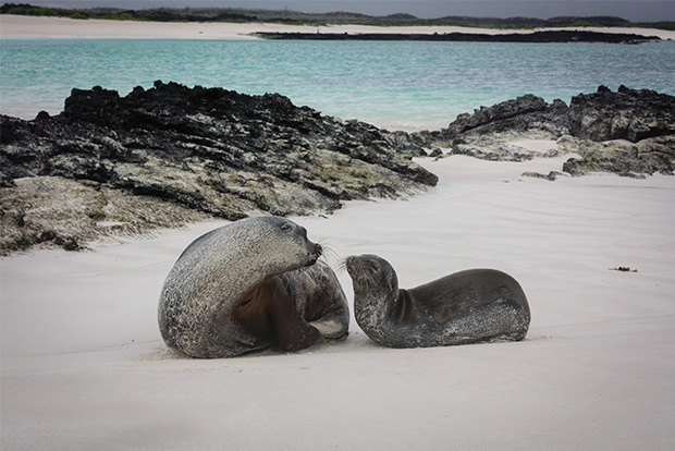 Galapagos Islands cruise trips