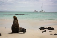 Galapagos Catamaran Tours Cruises to the Galapagos Islands for 13 people January 2017