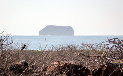 Using Twitter to search the Galapagos Islands