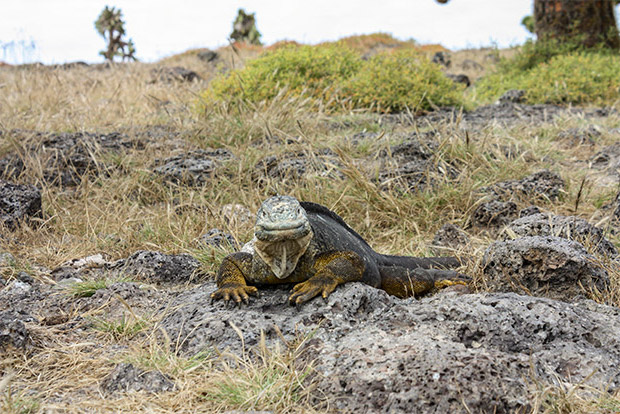 Cruises to the Galapagos Islands for 10 people December 2016