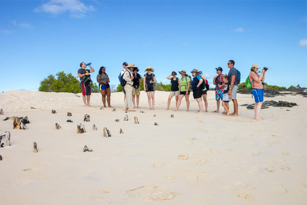 Cruises to the Galapagos Islands for 13 people December 2019
