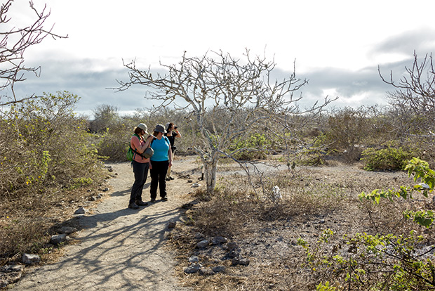 Cruises to the Galapagos Islands for 15 people December 2016