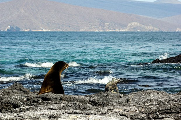 Cruises to the Galapagos Islands for 5 people December 2016