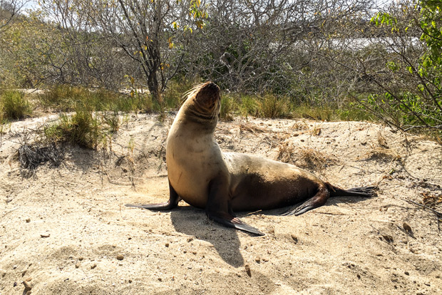 Family cruises to the Galapagos Islands December 2016