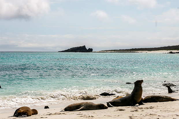 Catamarans for couples to the Galapagos Islands January 2017