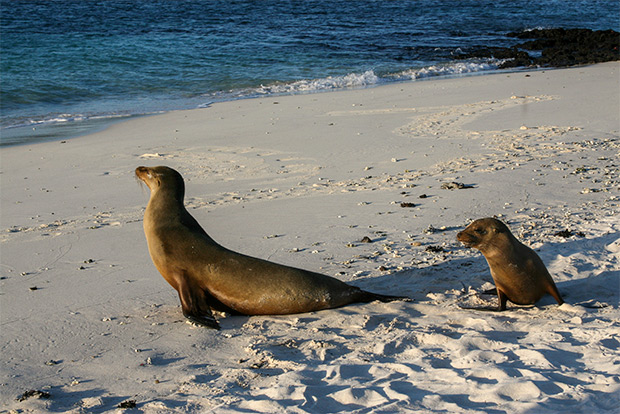 Cruises to the Galapagos Islands for 1 person January 2017