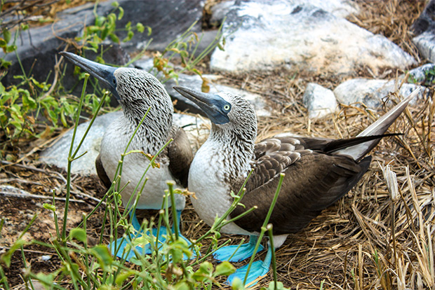 Cruises to the Galapagos Islands for 13 people February 2017