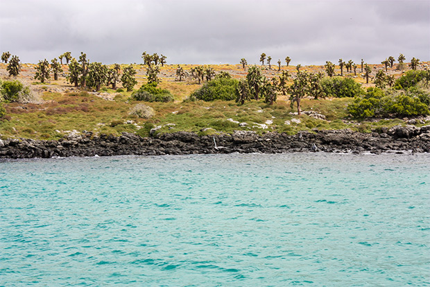 Cruises to the Galapagos Islands for 13 people January 2017