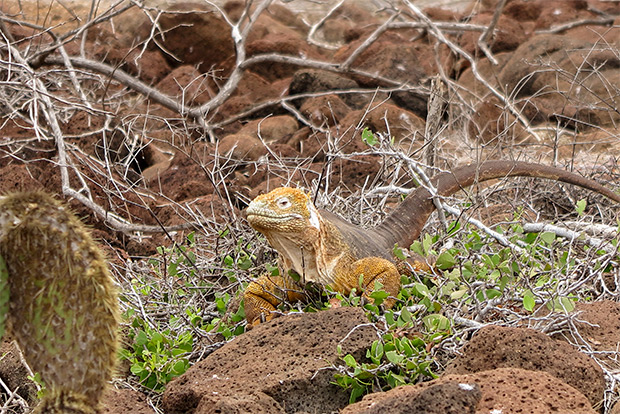 Cruises to the Galapagos Islands for 15 people January 2017