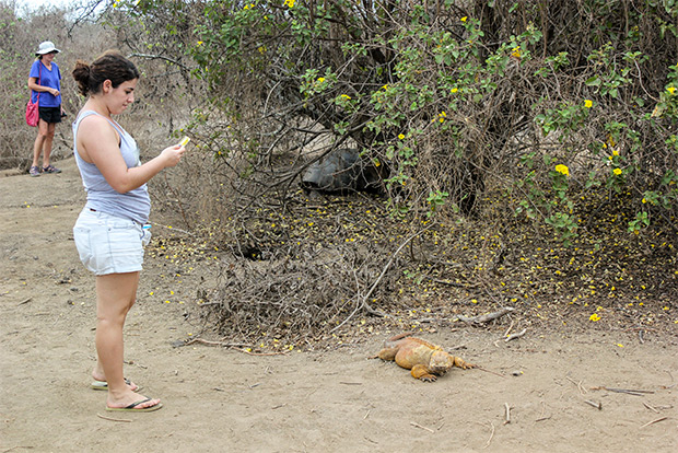 Cruises to the Galapagos Islands for 3 people January 2017
