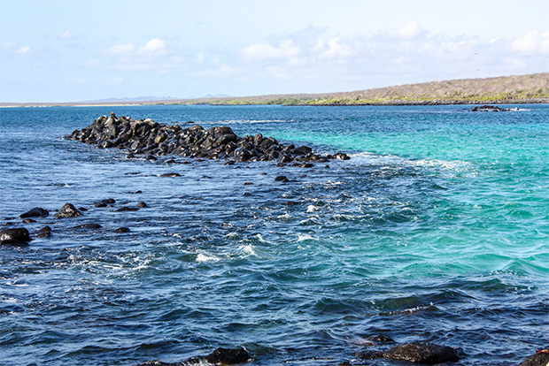 Low-priced catamarans to the Galapagos Islands January 2017