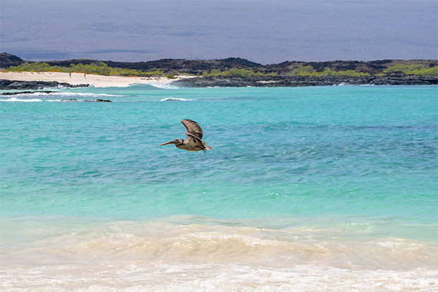 Cruises to the Galapagos Islands for 12 people April 2017