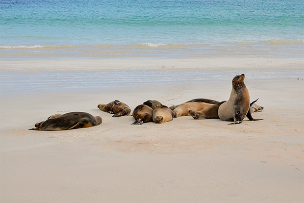 Cruises to the Galapagos Islands for 13 people 2017
