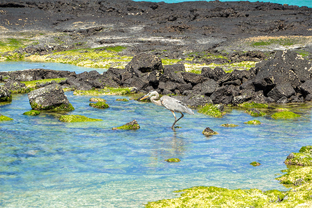 Cruises to the Galapagos Islands for 15 people 2017