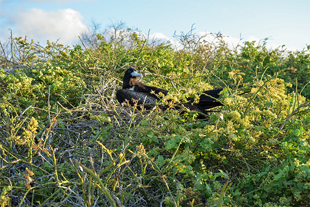 Cruises to the Galapagos Islands for 15 people April 2017