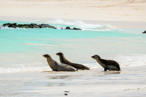 Cruises to the Galapagos Islands for 9 people 2017