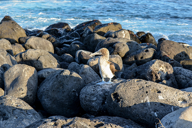Cruises to the Galapagos Islands for Middle Class 2017