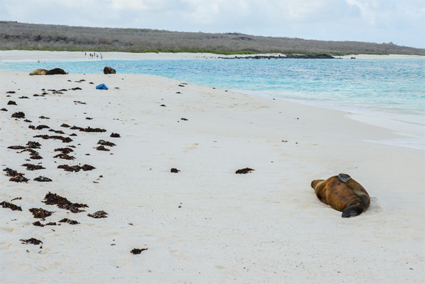 Cruises to the Galapagos Islands for Youth 2017