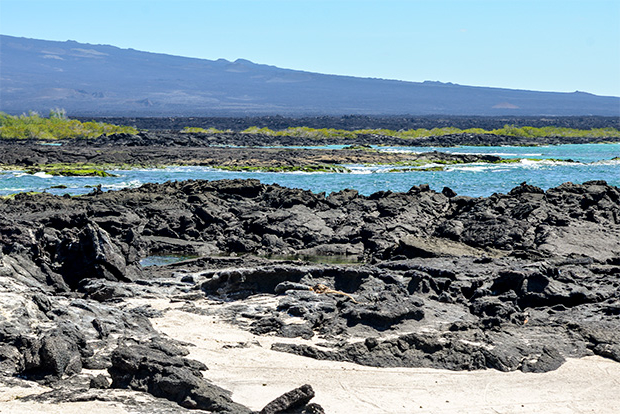 Cruises to the Galapagos Islands with Friends 2017