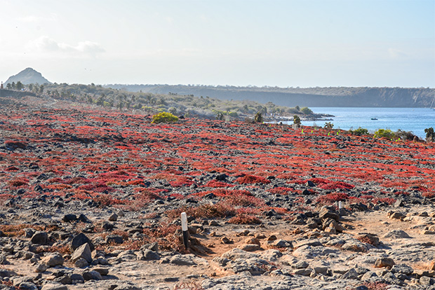 Tour Packages to the Galapagos Islands in March 2017
