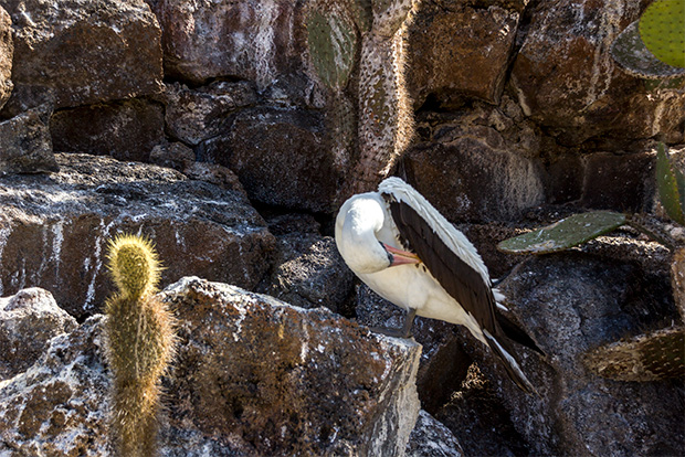 Cruises to the Galapagos Islands Gay Friendly