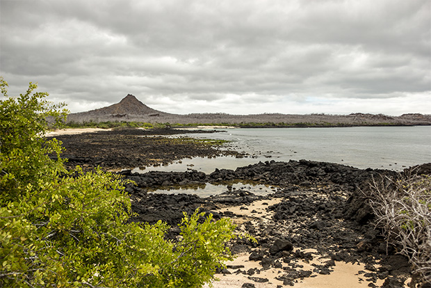 Cruises to the Galapagos Islands for Marriage