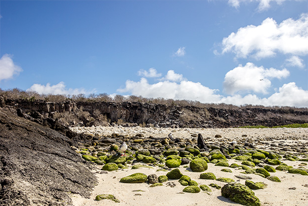 Cruises to the Galapagos Islands for seniors