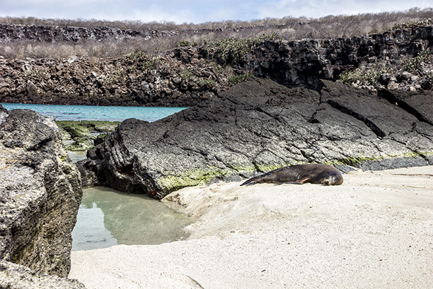 Cruises to the Galapagos Islands for the middle class