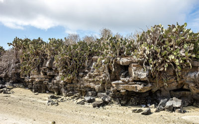 Galapagos Islands Holiday Packages for Groups