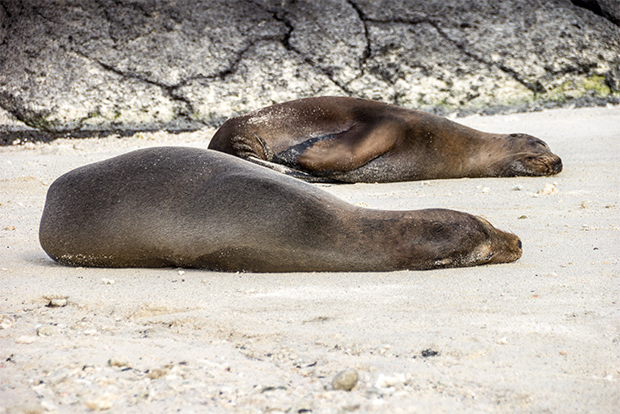 Galapagos Islands Touristic Packages