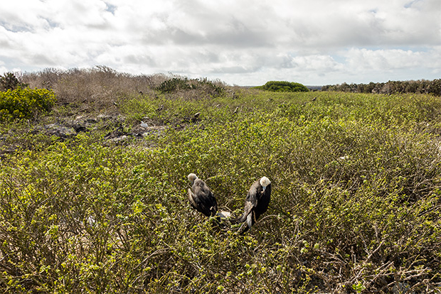 Galapagos Islands Vacation Packages for the whole family