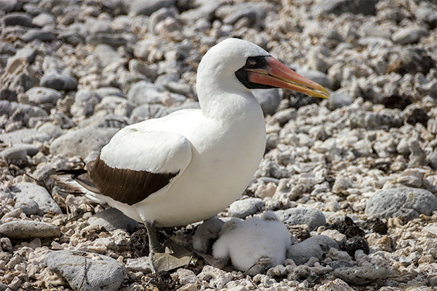 Last Minute Galapagos Cruise Offer