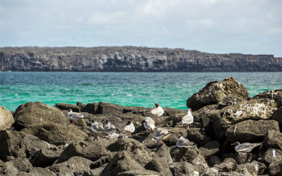 Tours to Galapagos Islands for couples