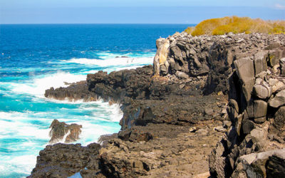Cruises for couples to the Galapagos Islands June 2017
