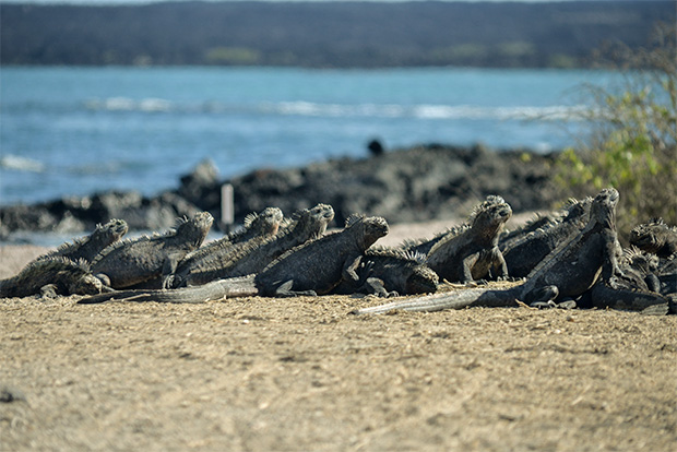 Cruises to the Galapagos Islands for 16 people June 2017