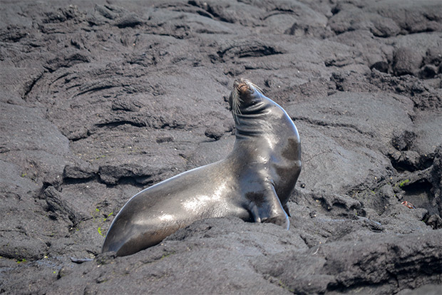 Cruises to the Galapagos Islands for 3 people May 2017