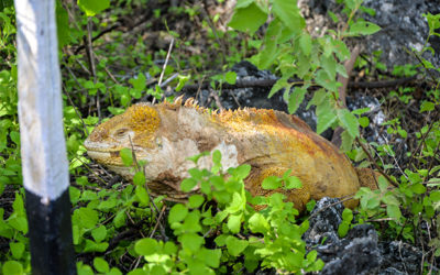 Holidays in Galapagos Islands May 2017