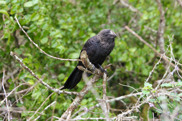 Cruises on offer to the Galapagos Islands August 2017