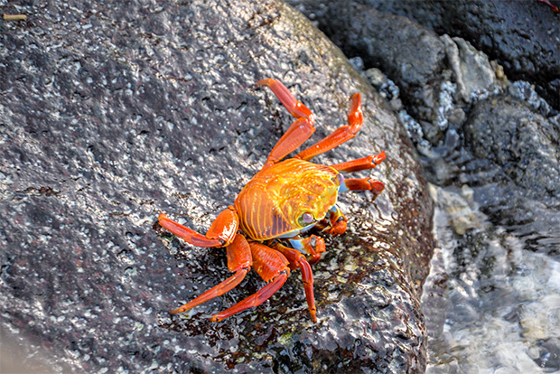 Cruises to the Galapagos Islands August 2017