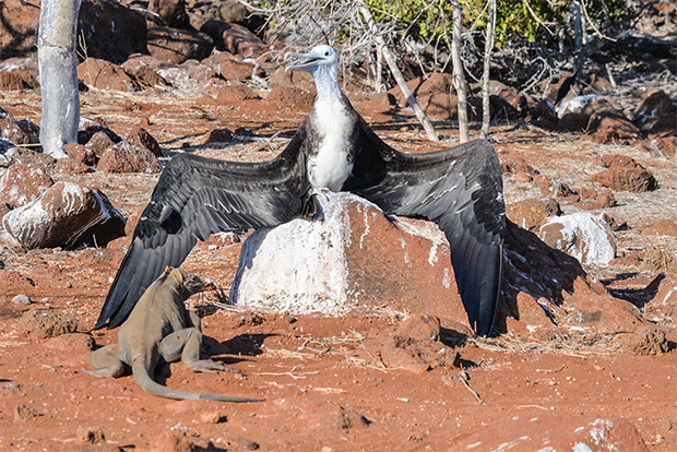Cruises to the Galapagos Islands for 11 passengers September 2017