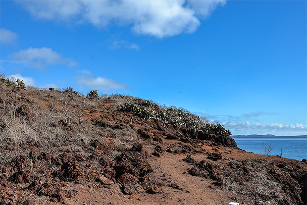 Cruises to the Galapagos Islands for 14 passengers August 2017