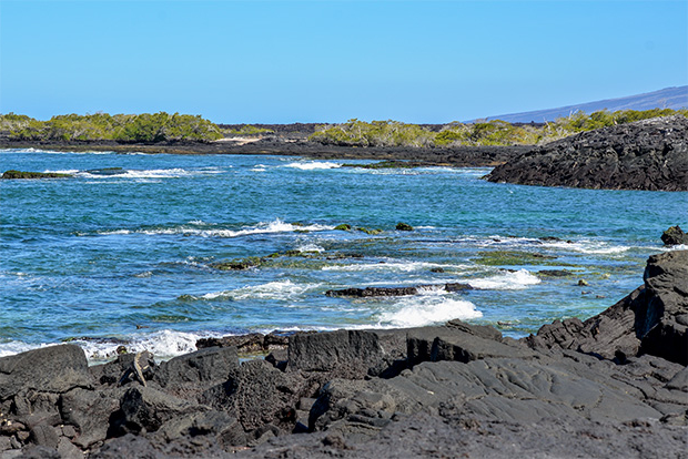 Cruises to the Galapagos Islands for 14 passengers July 2017