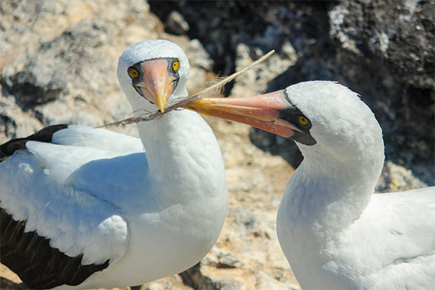 Cruises to the Galapagos Islands for 7 passengers August 2017