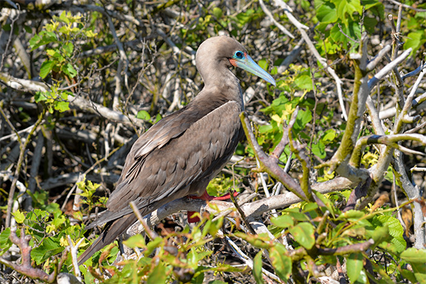 Catamarans to the Galapagos Islands for 1 person September 2017