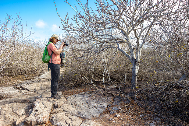 Cruises to the Galapagos Islands October 2017