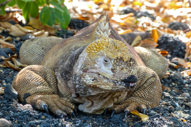 Cruises to the Galapagos Islands for 10 people December 2017