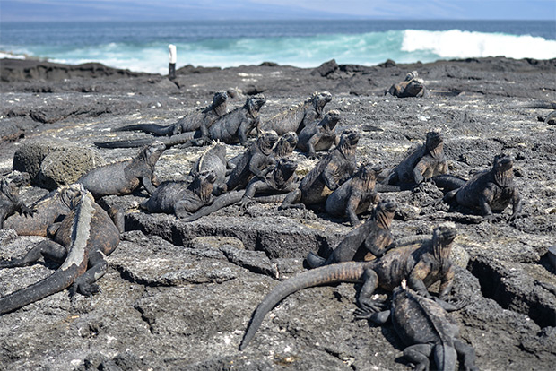 Cruises to the Galapagos Islands for 10 people October 2017