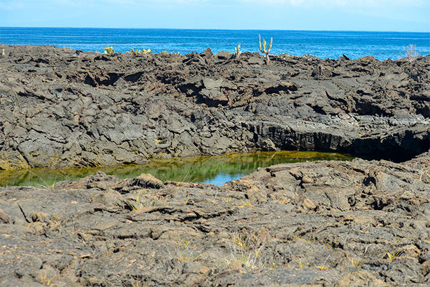 Cruises to the Galapagos Islands for 11 people September 2017