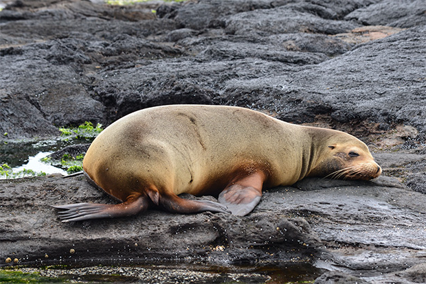 Cruises to the Galapagos Islands for 16 people October 2017